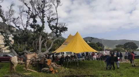 Ahipara hapū discuss occupation following attack on 300-year-old tree